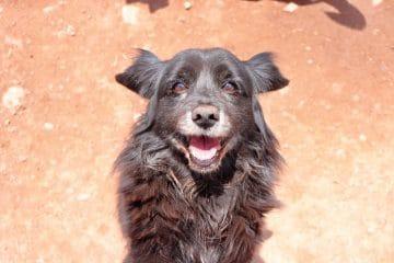 Smiley dog Peru shelter