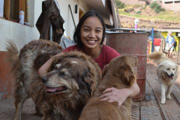 Peru Dog Shelter in Cusco