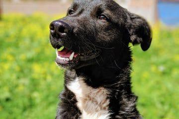 Friendly dog in Cusco