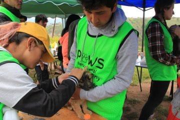 Peru Animal Welfare Society