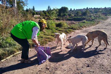 Feeding Street Dogs Cusco Peru