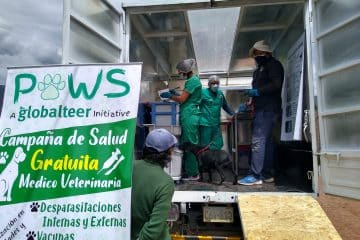 Health campaigns for dogs in Cusco with our mobile clinic