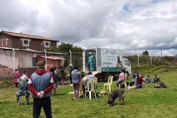 Providing free healthcare and sterilisation to dogs in Cusco, Peru