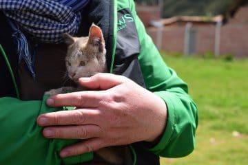 PAWS Peru animal welfare society helping animals in Cusco - Animal Welfare Project Peru
