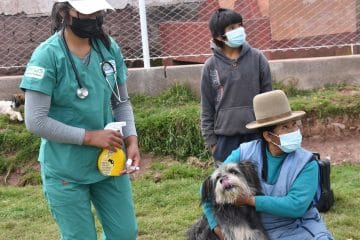 Saving Dogs - Health campaigns for dogs in Cusco Peru