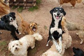 Dog Shelter Cusco