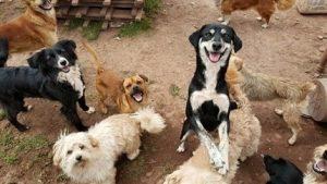 Rescued Dogs Cusco Peru