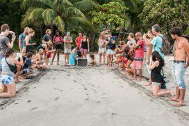 Releasing baby turtles in Costa Rica