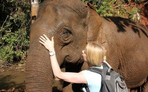Cambodia elephant Sanctuary volunteering