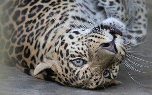 Laos wildlife Rescue
