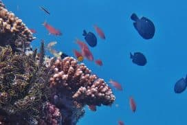 Reefs at the Borneo Marine Conservation project