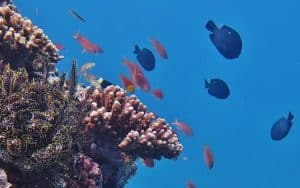 Reefs at the Borneo Marine conservation