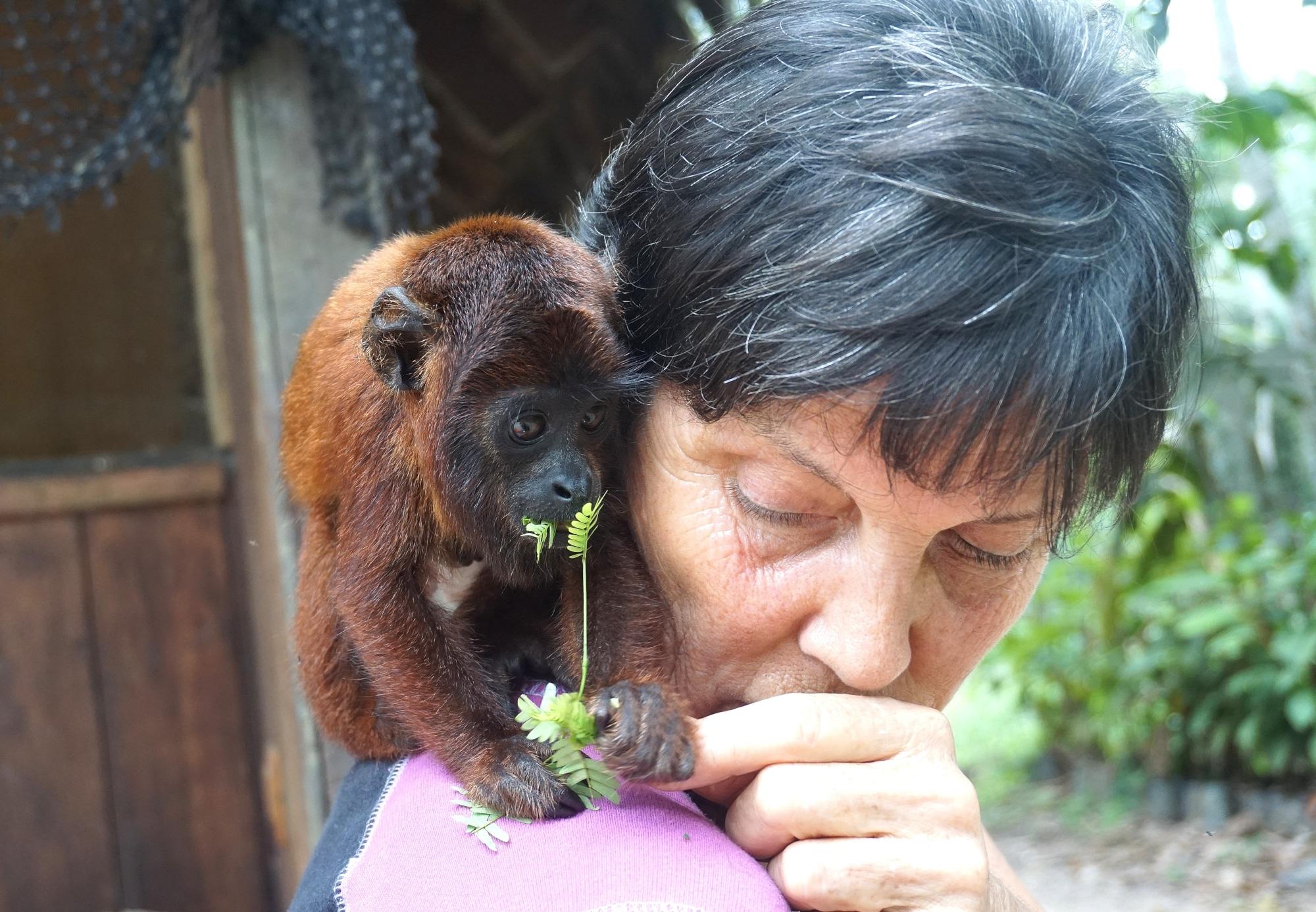 Volunteer with wildlife in Peru