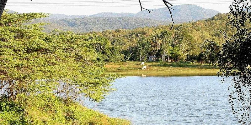 The Thailand Elephant Sanctuary surroundings