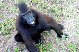 Lively happily and safely at the Indonesia Wildlife Sanctuary