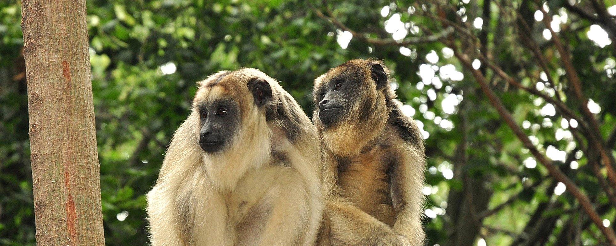 Monkeys rescued in South America