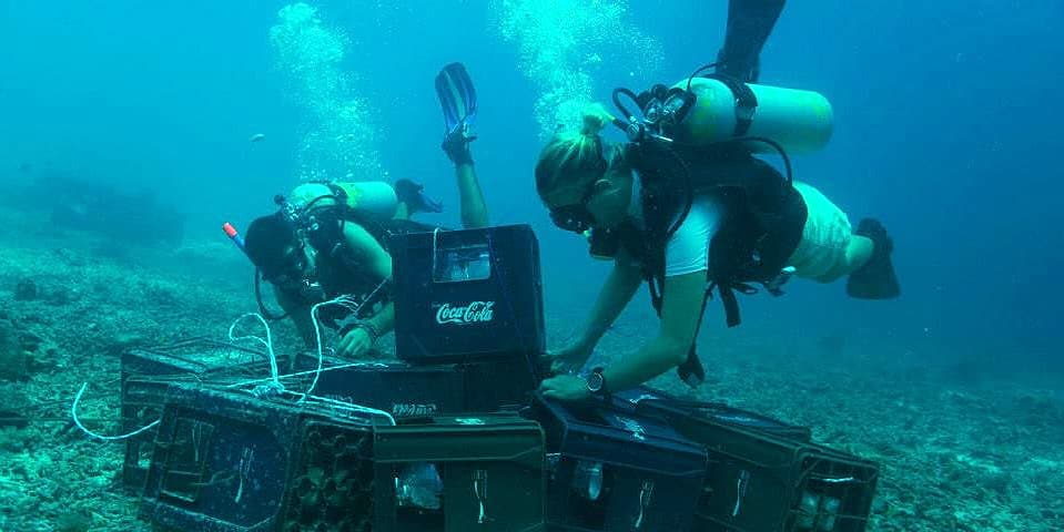 Building reefs at the Borneo Marine and Coral Conservation Project