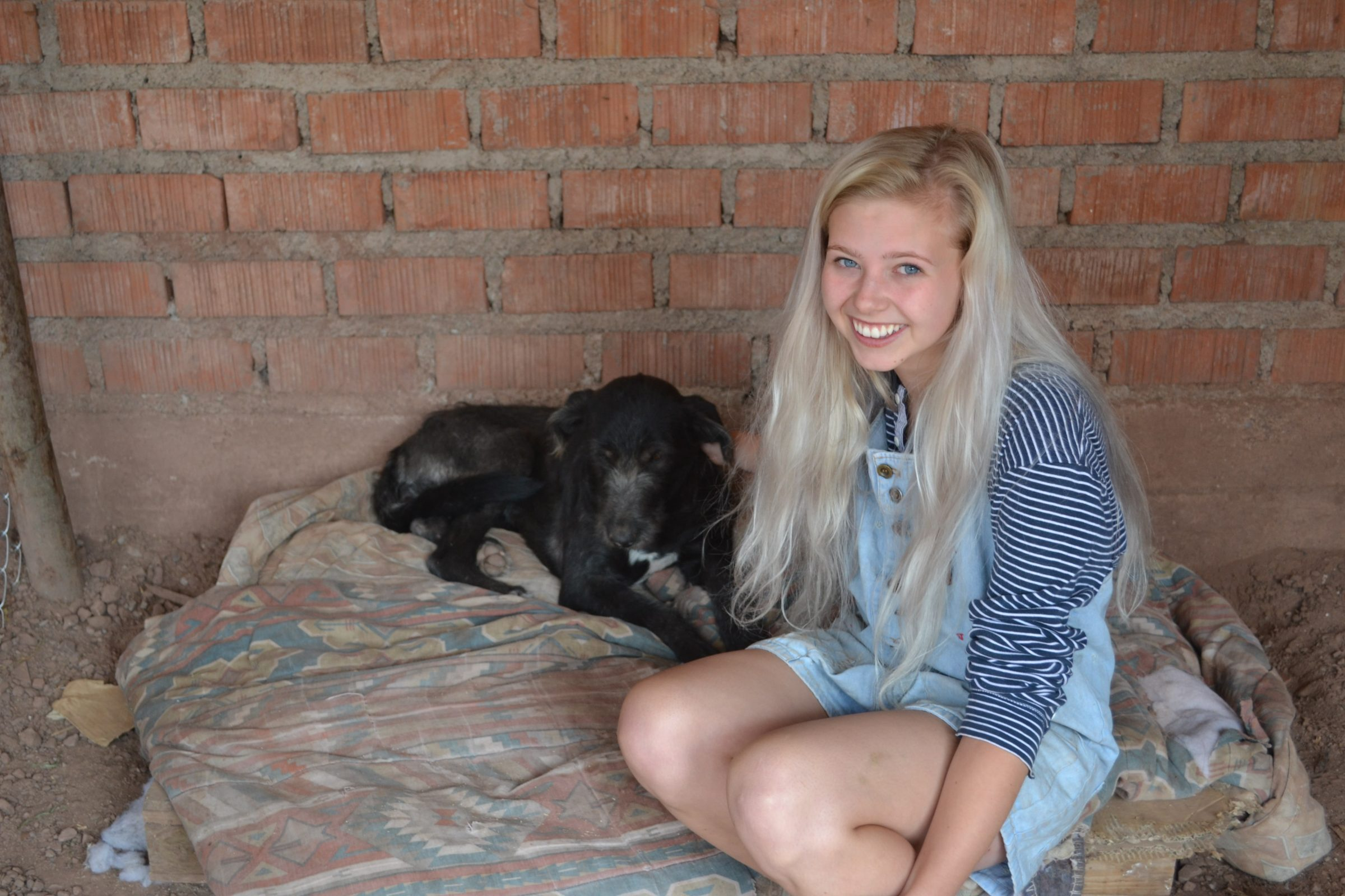 Volunteering with dogs in Peru