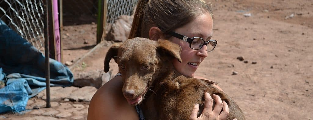 Volunteer at the Peru Dog project