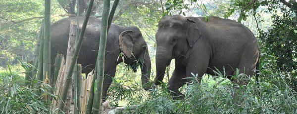 Elephant love at the sanctuary