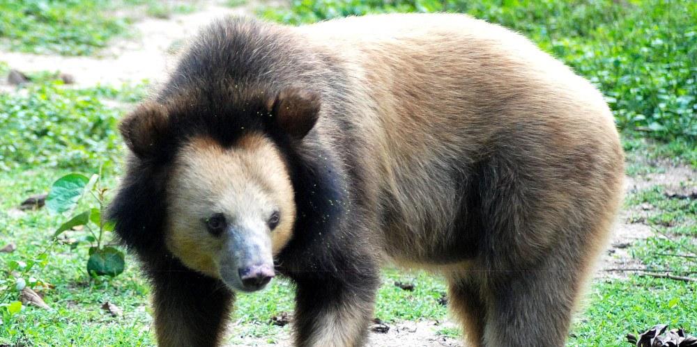 Cambodia Bear Rescue Project