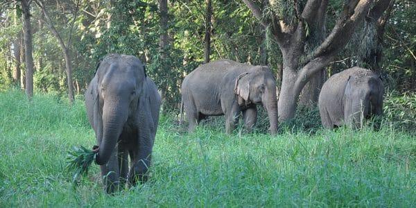 Elephants at the Northern Thailand Elephant Sanctuary