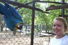 Volunteer at the Thailand wildlife sanctuary