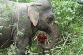 Elephant encounters Thailand