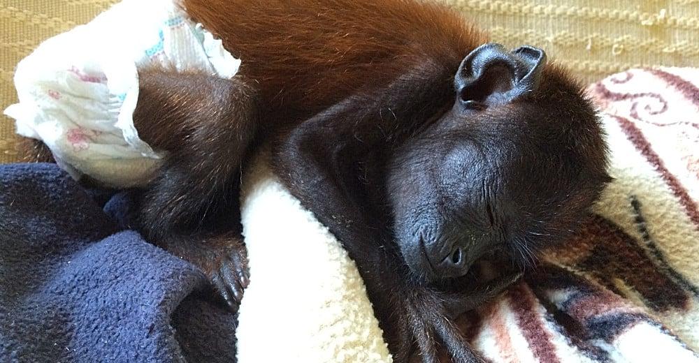 Peru Amazon wildlife sanctuary