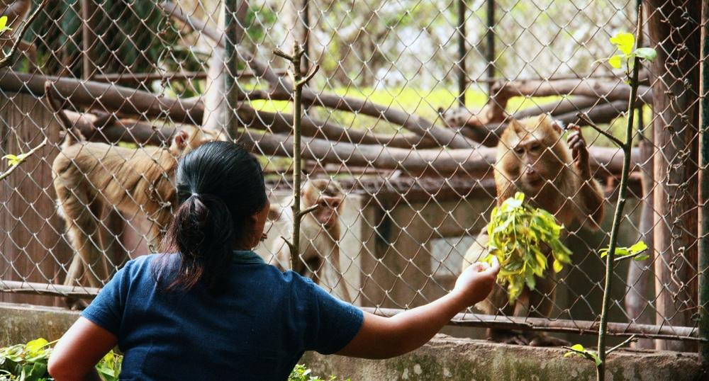 Volunteer at the Laos Wildlife Rescue Centre