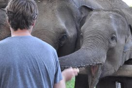 Volunteer at the Northern Thailand elephant project
