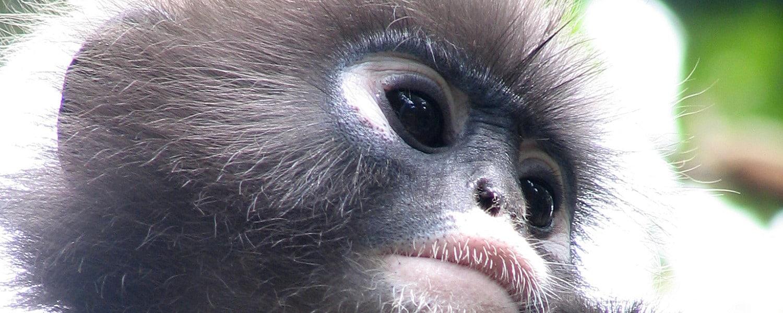 Thailand Wildlife Sanctuary