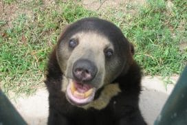 Bear at the Sanctuary