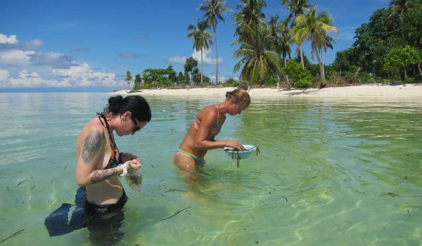 Volunteer at the Borneo Marine conservation project
