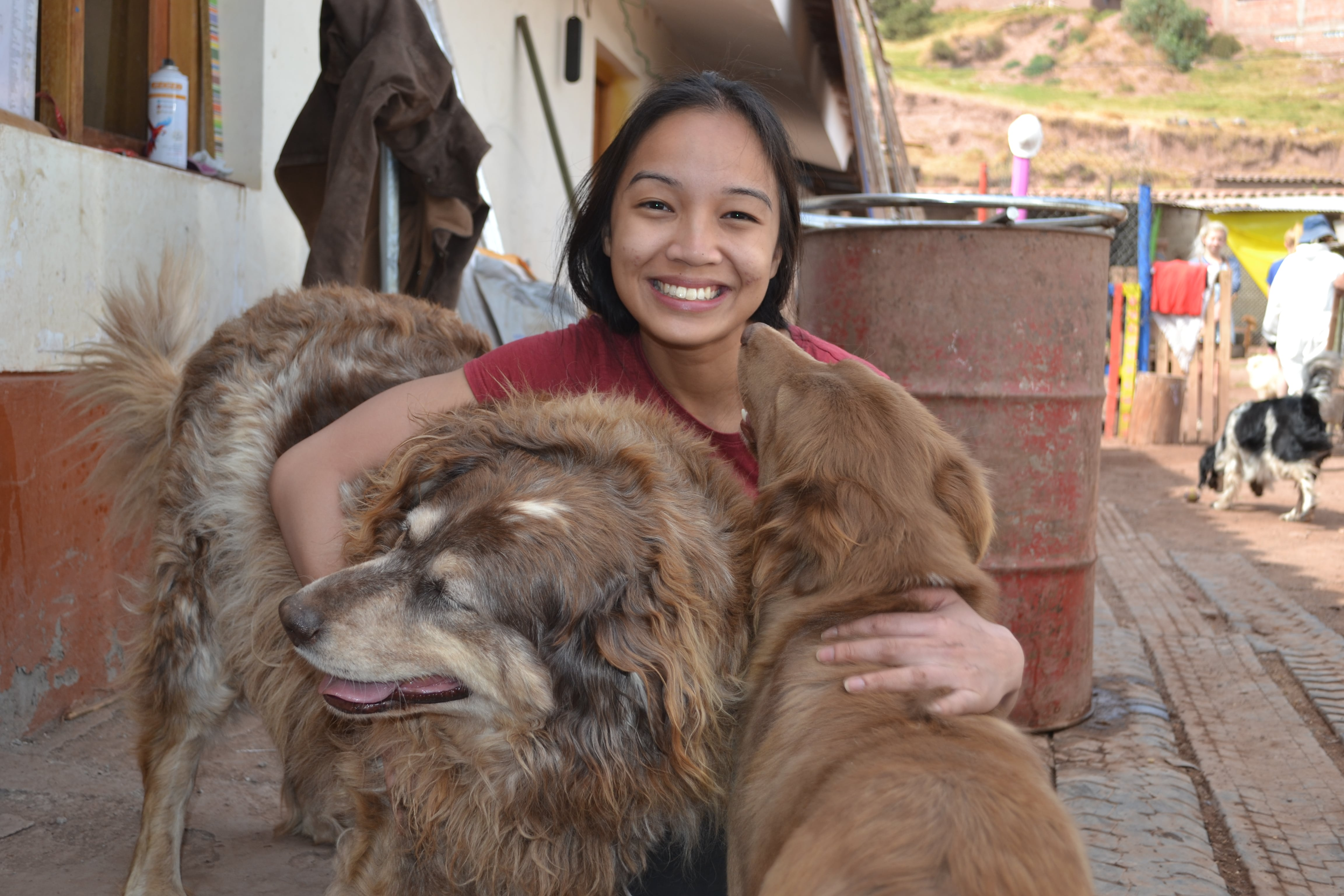Volunteer at the Peru Dog Rescue Shelter