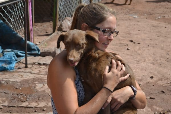Dog Shelter in Cusco