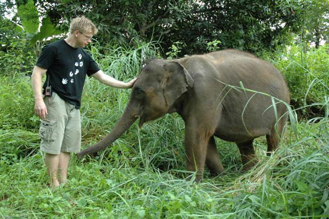 Baby Elephant at the Thailand Sanctuary