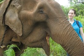 Cambodia Elephant Project