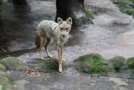 Rescued wildlife at Laos Sanctuary