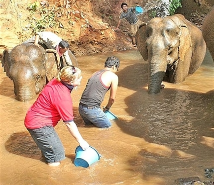 washing elephants in river at elephant sanctuary