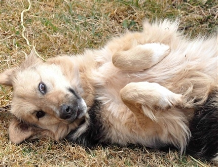 Dog rolling in grass at Peru Dog Rescue Project
