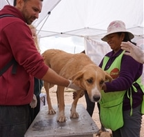 health check for dogs at Peru Dog Rescue Project