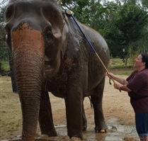 Volunteer review from Thailand