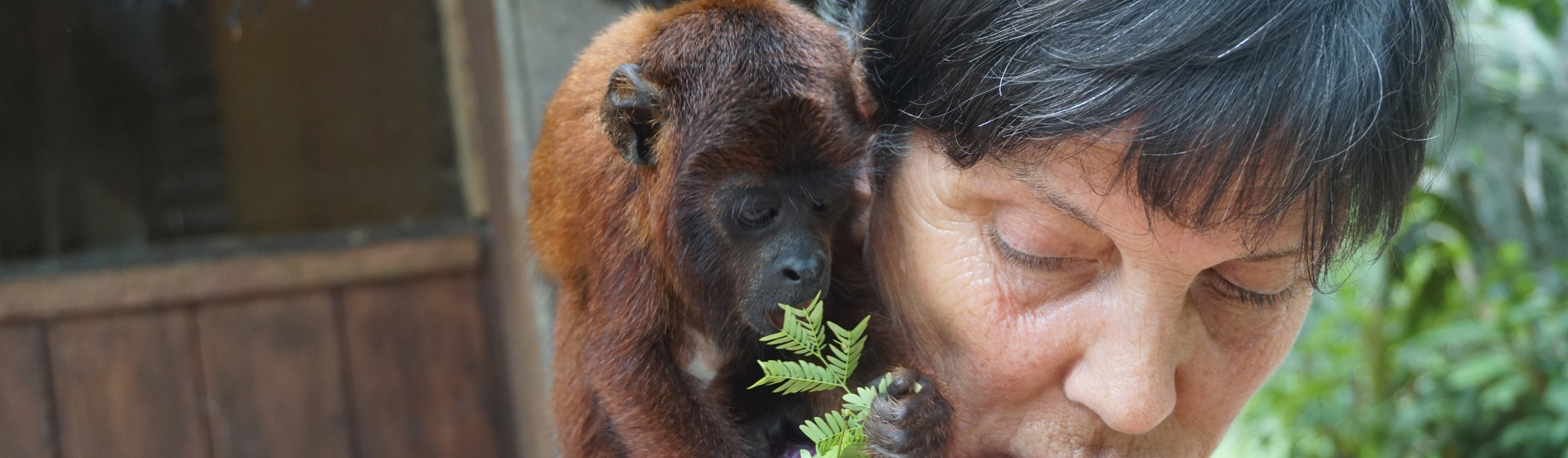 Volunteer with wildlife and animals abroad