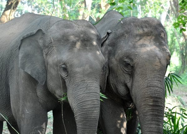 Two of the elephants at the sanctuary