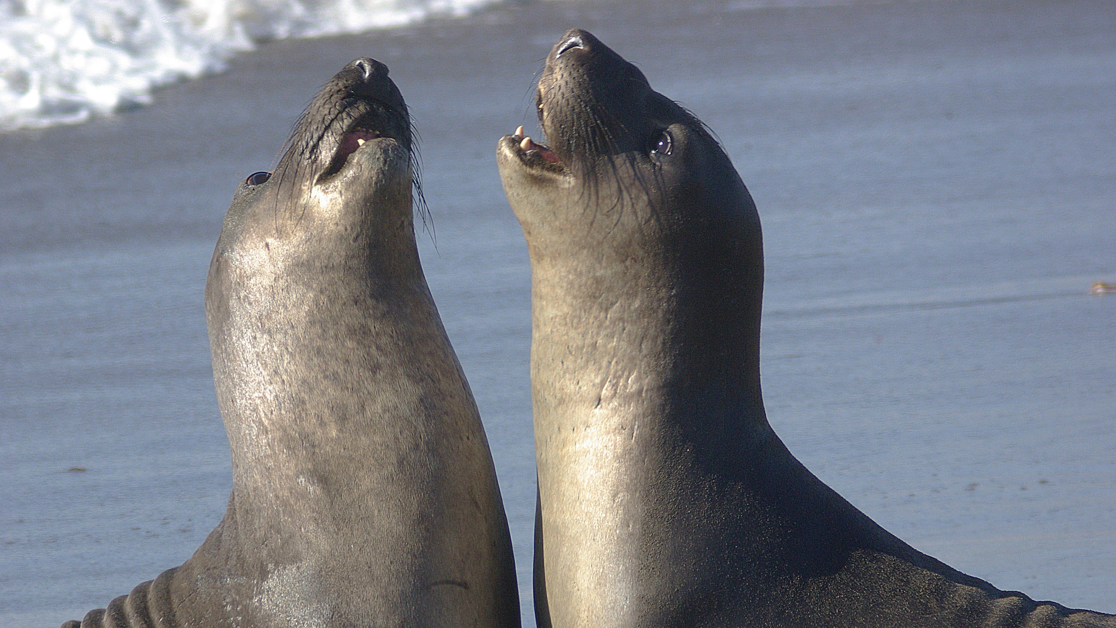 Peru Marine Conservation Project