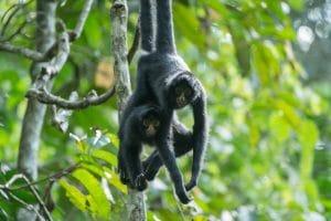 Monkeys in the Peru Amazon
