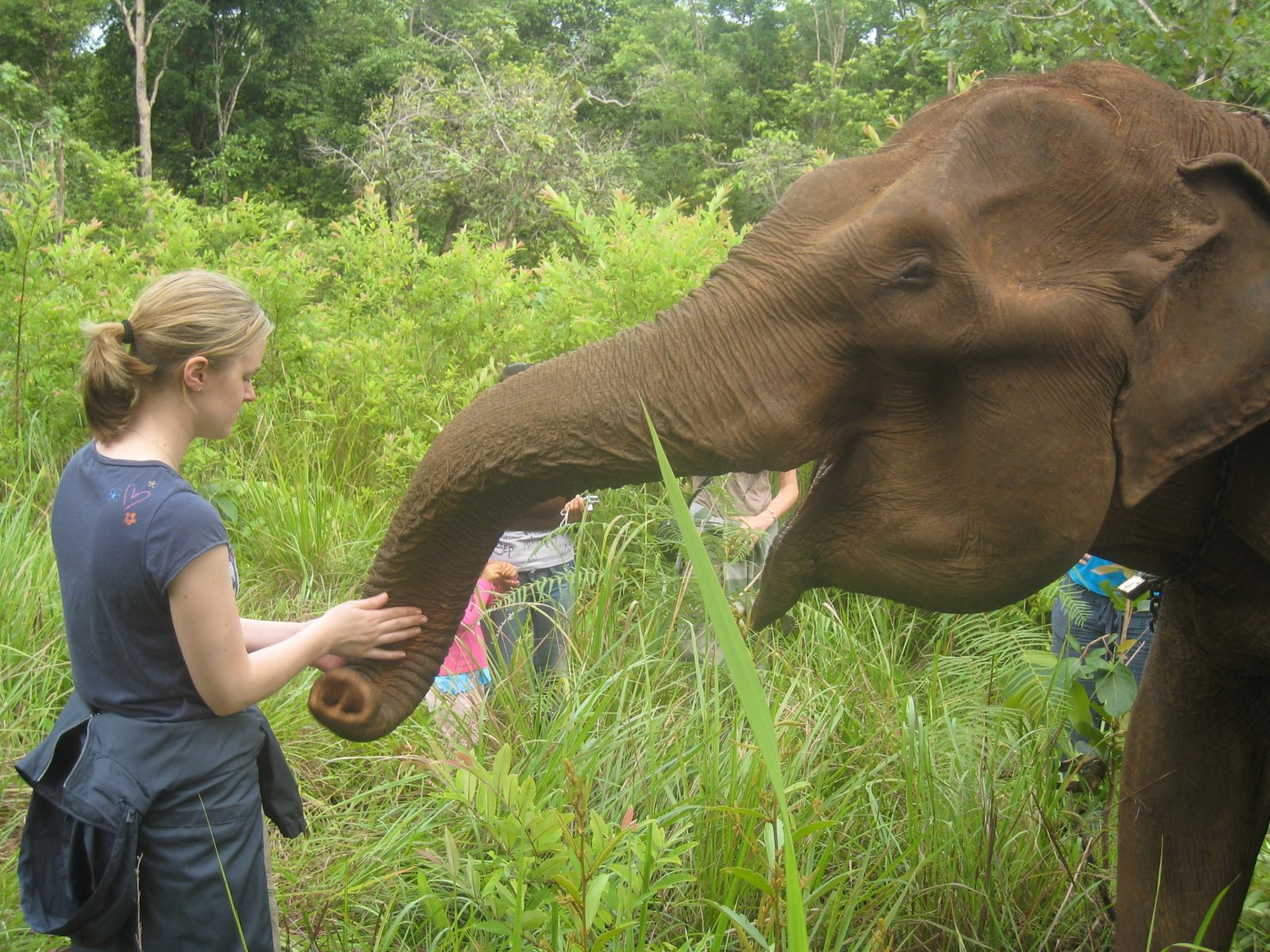 Getting up close with elephants at Elephant Sanctuary
