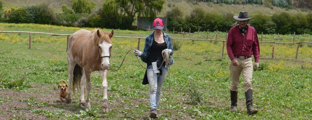 Horse Shelter Volunteer Peru