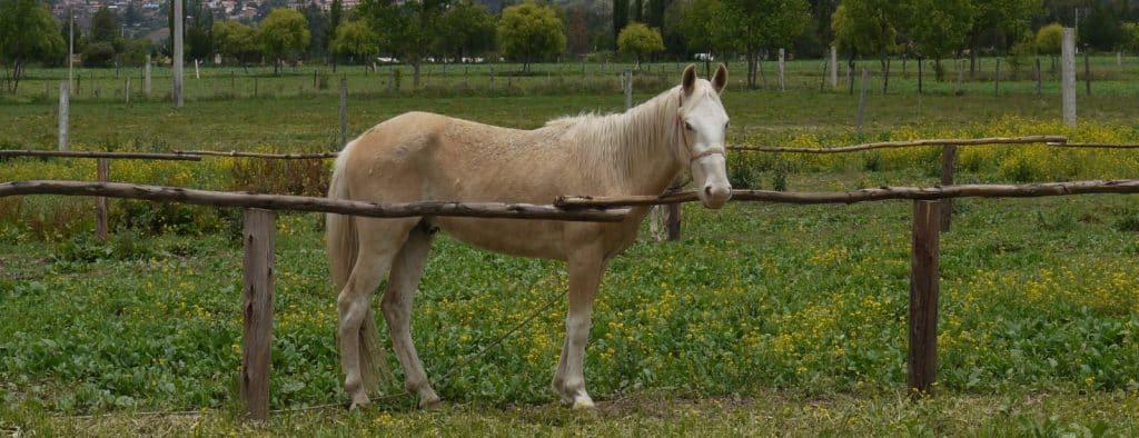 Volunteer at Horse Shelter